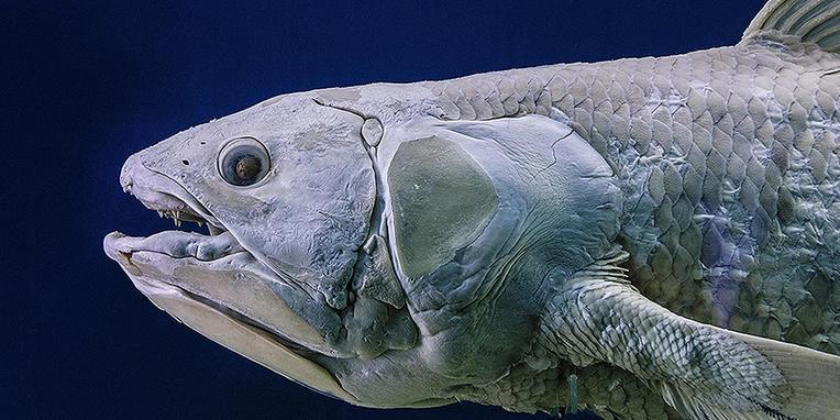 coelacanth-shelf-life-tw_billboard